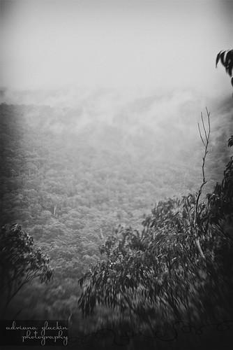 mist & fog in springtime_2