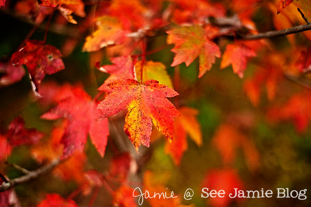 Fall leaves - Oct 2011