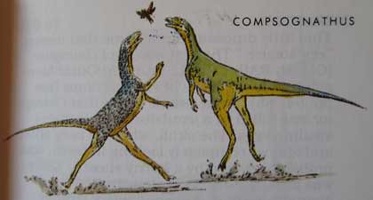 Peterson First Guides: Dinosaurs p. 43