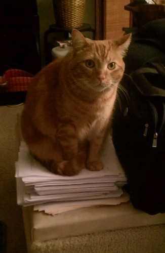 Ptw Leki has @shatteredhaven work papers under control