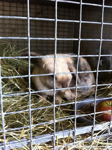 ff-bunny