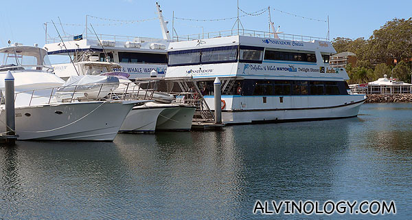 The Moonshadow cruise ship we will be boarding for dolphin watching