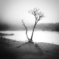 V (Hengki Koentjoro) Tags: mist tree misty fog indonesia branches dream caldera stump serene tranquil sparse putih kawah
