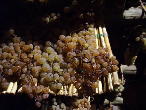 2011-10 Toskana-Reise der Deutschen Wein- und Sommelierschule 292 - Avignonesi