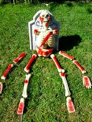 111022-Skelyard.jpg (melissssaf) Tags: california red white green halloween yard skeleton la los blood angeles decoration bone