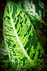 ~TropicalFoliageOnOahu,Hawaii#3~ (TravelsThruTheUniverse) Tags: tropical tropicalplants zengardens oahuhawaii tropicalgardens tropicalfoliage flowersfoliage tropicallandscapes tropicalgardenslandscaping tropicalflowersfoliage