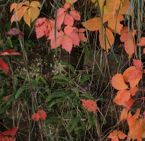 01.fall-colors.2001a