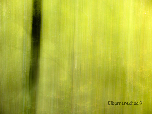 Bosque abstracto /Abstract forest