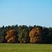 herbst-29.10.2011-2