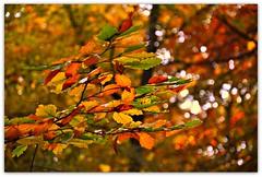 Autumn colors (Lispeltuut) Tags: park city autumn berlin nature germany herbst mitte tiergarten coth
