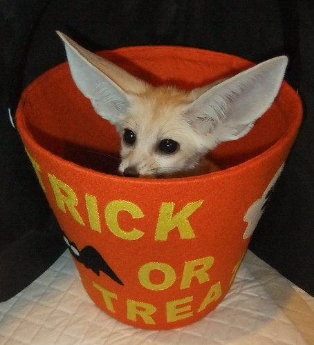 Trick or treat fennec