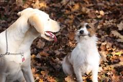 Gab&Lily