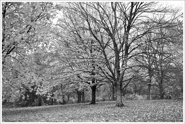 Forest Park 2011-11-06 2 BW