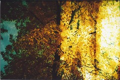 (taylor-randal) Tags: november tree fall film 35mm taylor cs damaged chinon epired nelander