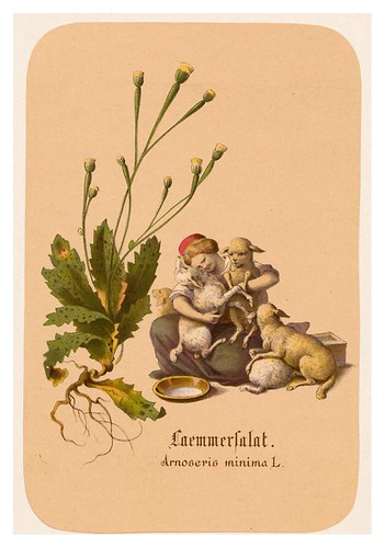 015-Lechugas de cordero-Illustrirtes Kräuterbuch –Aquarelle- 1870-Adolf Schroedter
