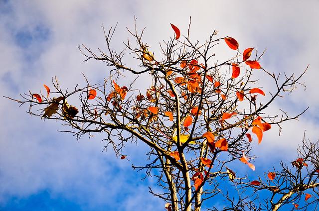 otoño 18