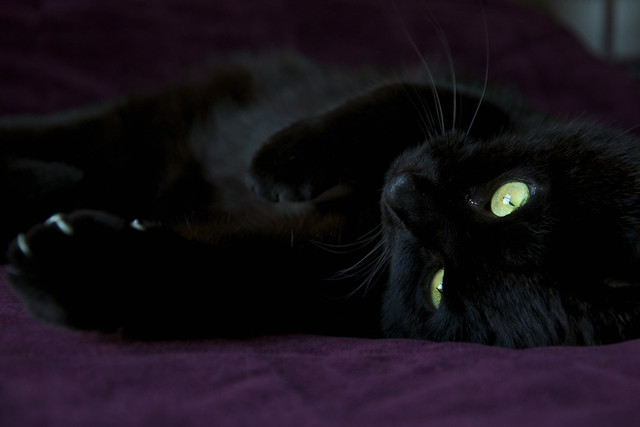black cat purple bed VIII