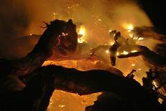 Stump pile burn. (Henk Scholten1) Tags: stump pilerootsfireburningflamesembershotheatabstract