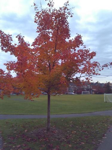 Multicolored leaves!