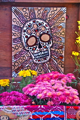 Pink and Purple Mums (plantmanbuckner) Tags: california colors fruit dayofthedead skulls candles sandiego tequila skeletons offerings hallowmas diadelosinocentes theplantman