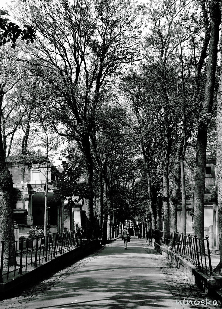 cimentiere-arbresBW