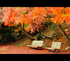 Take a rest [EXPLORE] ( ()) Tags: japan maple olympus explore  zuiko e30   1454