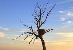 Medusa (Kansas Poetry (Patrick)) Tags: eagle eaglesnest clintonlake patrickemerson stullkansas 400road nancymulchparadise
