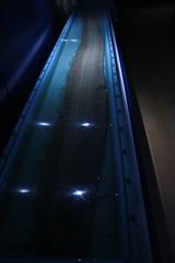 Oarfish (Aula del Mar, Cepesma) (Olaya Garcia) Tags: españa museum canon eos mar asturias museo aula luarca oarfish cepesma auladelmar 1000d regalecusglesne reydelarenque pezremo