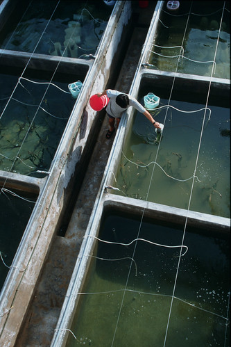 Hatchery, Vietnam. Photo by Dominyk Lever, 2004