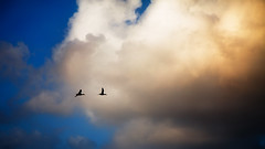Love is in the Air (Pouya-P) Tags: sky love nature birds clouds canon air 24105l 5dmk2