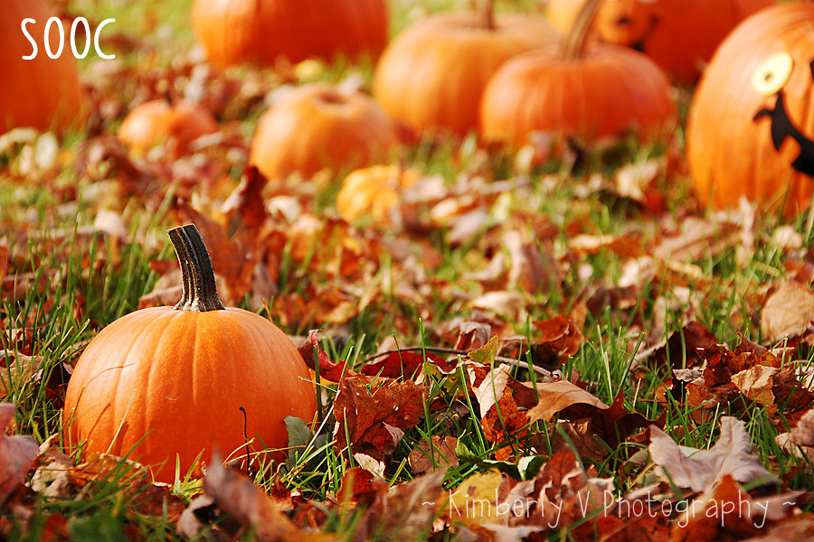 Pumpkins1-SOOC
