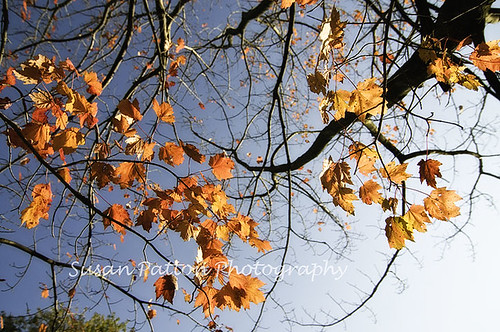 wAutumn_leaves