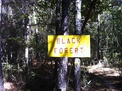 Black Forert