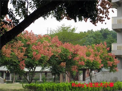2011山陽國小 (6)