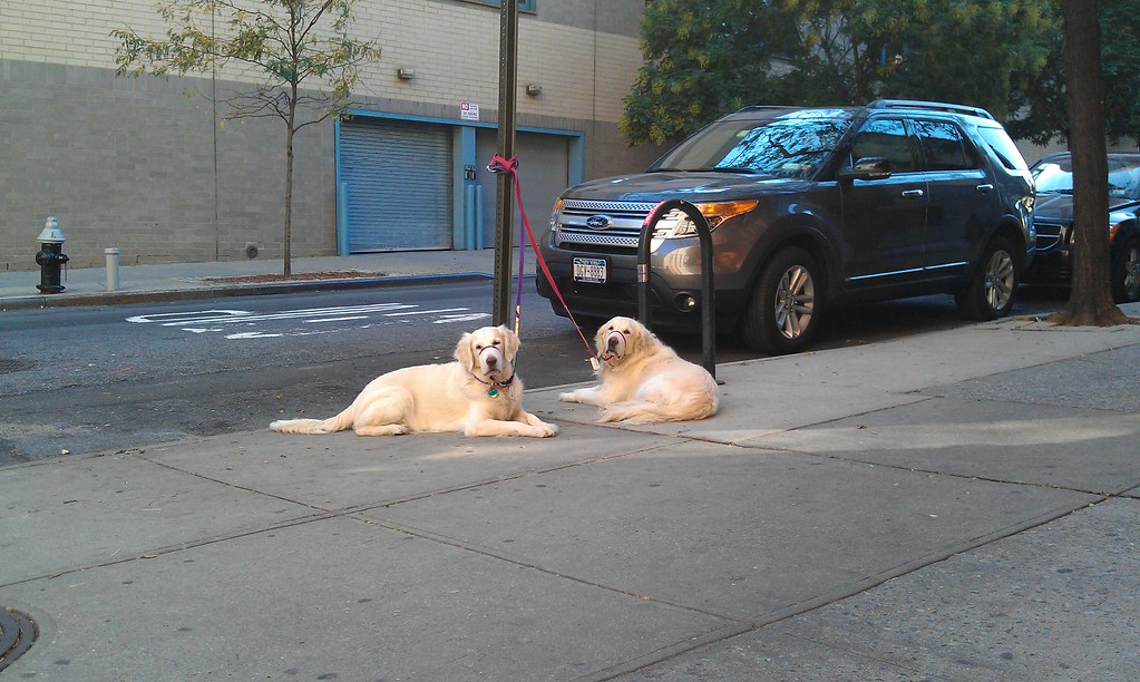 Daily Deli Dogs 22 October 2011
