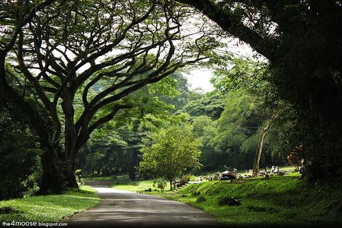 Bukit Brown Cemetery - Main Axis