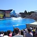 Sea World with SYR - 050