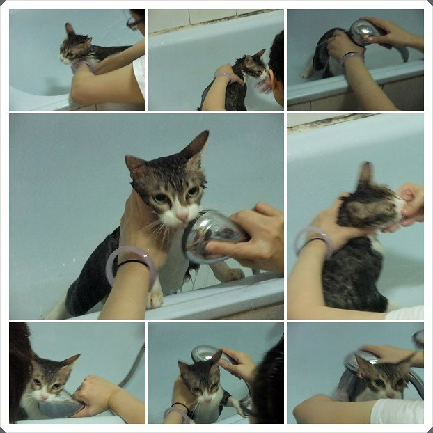 cats222