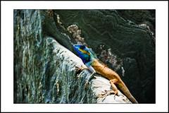 close-up #6 (e.nhan) Tags: life light art nature animal closeup colours dof bokeh backlighting enhan