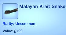 Malayan Krait Snake