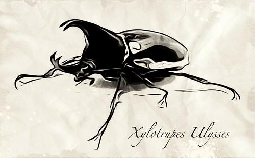 Xylotrupes Ulysses