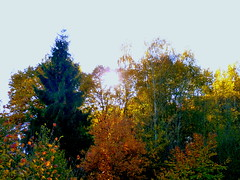 October Sun (cangaroojack) Tags: autumn fall leaves germany colours herbst treest