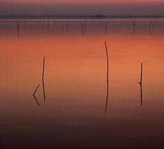 The evening light (da.geli) Tags: sunset italy lake umbria trasimeno doubleniceshot tripleniceshot mygearandme mygearandmepremium artistoftheyearlevel2