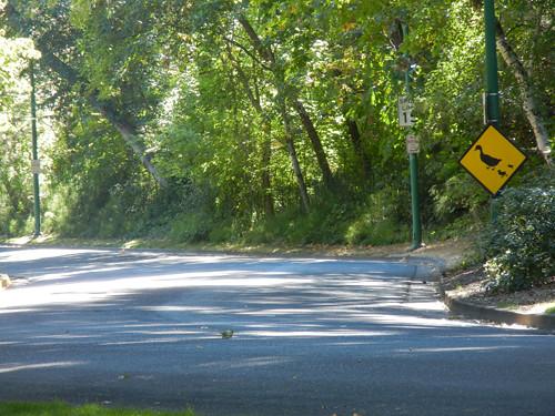 Lithia Park, Ashland, Oregon _ 6187