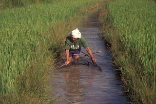 Aquaculture, Philippines. Photo by WorldFish, 1999