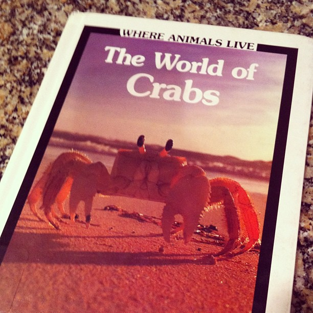 Project 365 306/365: My son keeps checking out library books about crabs....