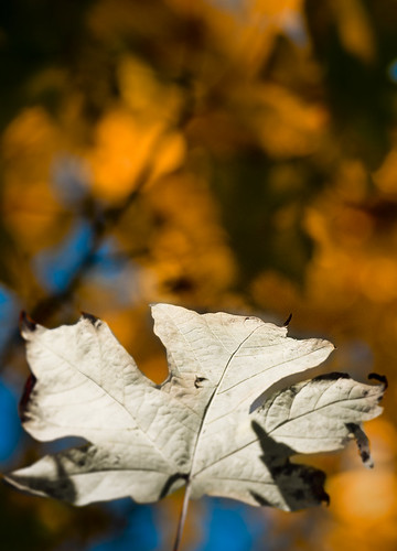 Leaf  by petetaylor