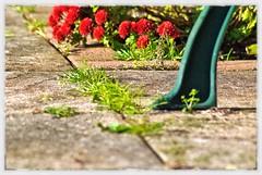 Weeds (BGDL) Tags: flowers garden weeds nikon paving manualfocus d80 ourdailychallenge snapseed