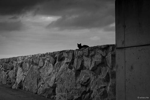 de noche, todos los gatos son pardos by eMecHe