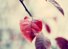 Fall Romance (SOMETHiNG MONUMENTAL) Tags: november red color fall nature leaves rain drops nikon branch dew d60 somethingmonumental mandycrandell